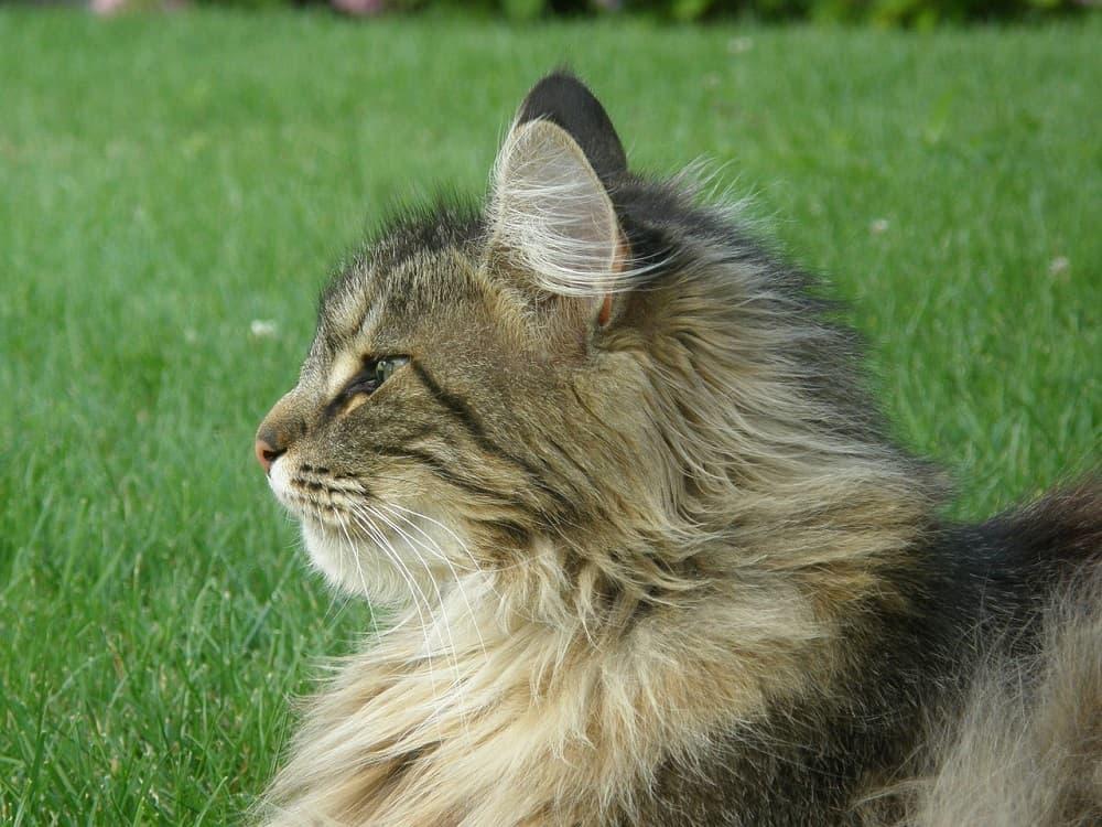 cat 2641351 1280