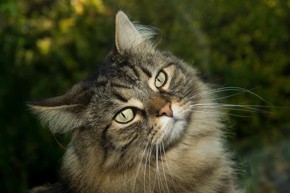 cat 2908707 1280