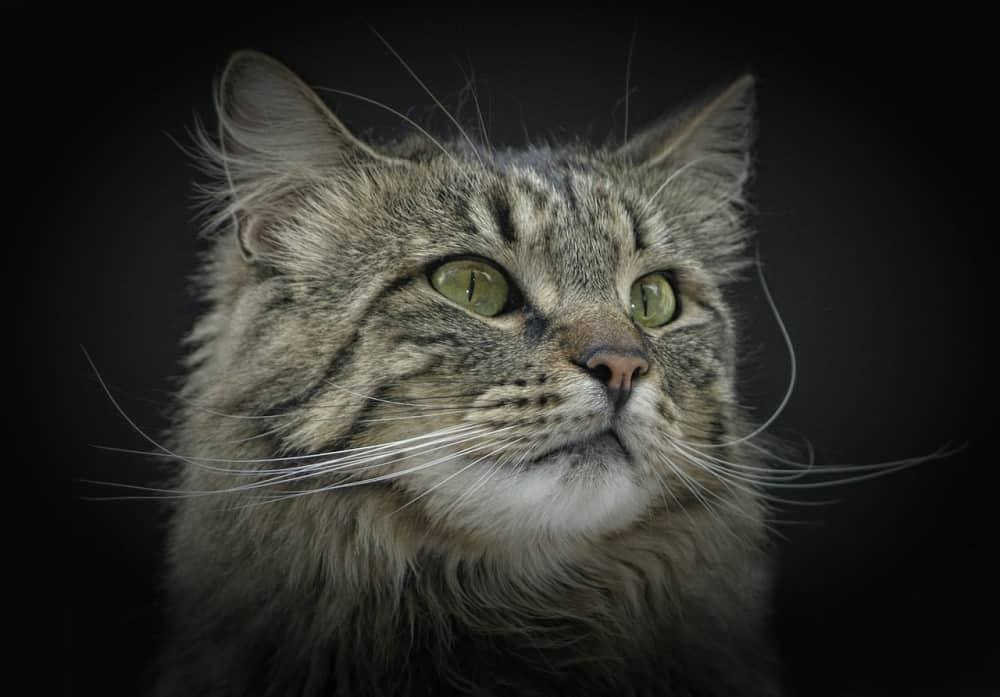 cat 385586 1280