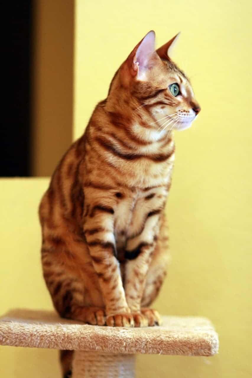cat 877110 1280