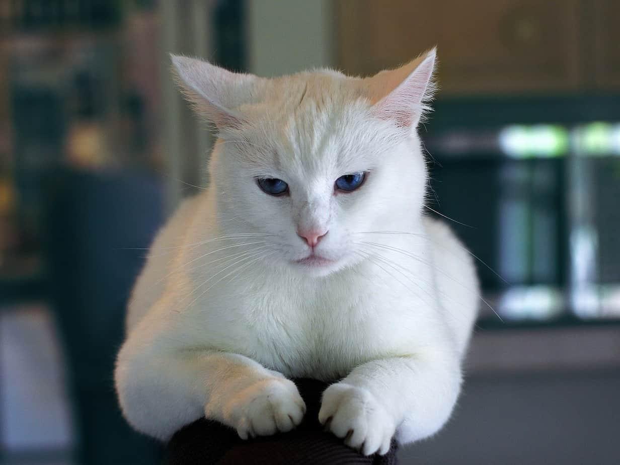 cat 996190 1280