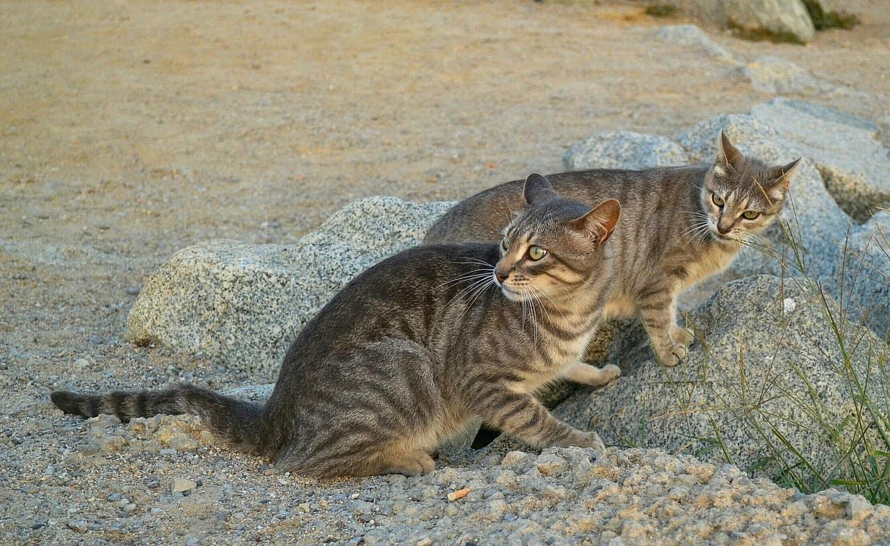 cats 2809300 1280