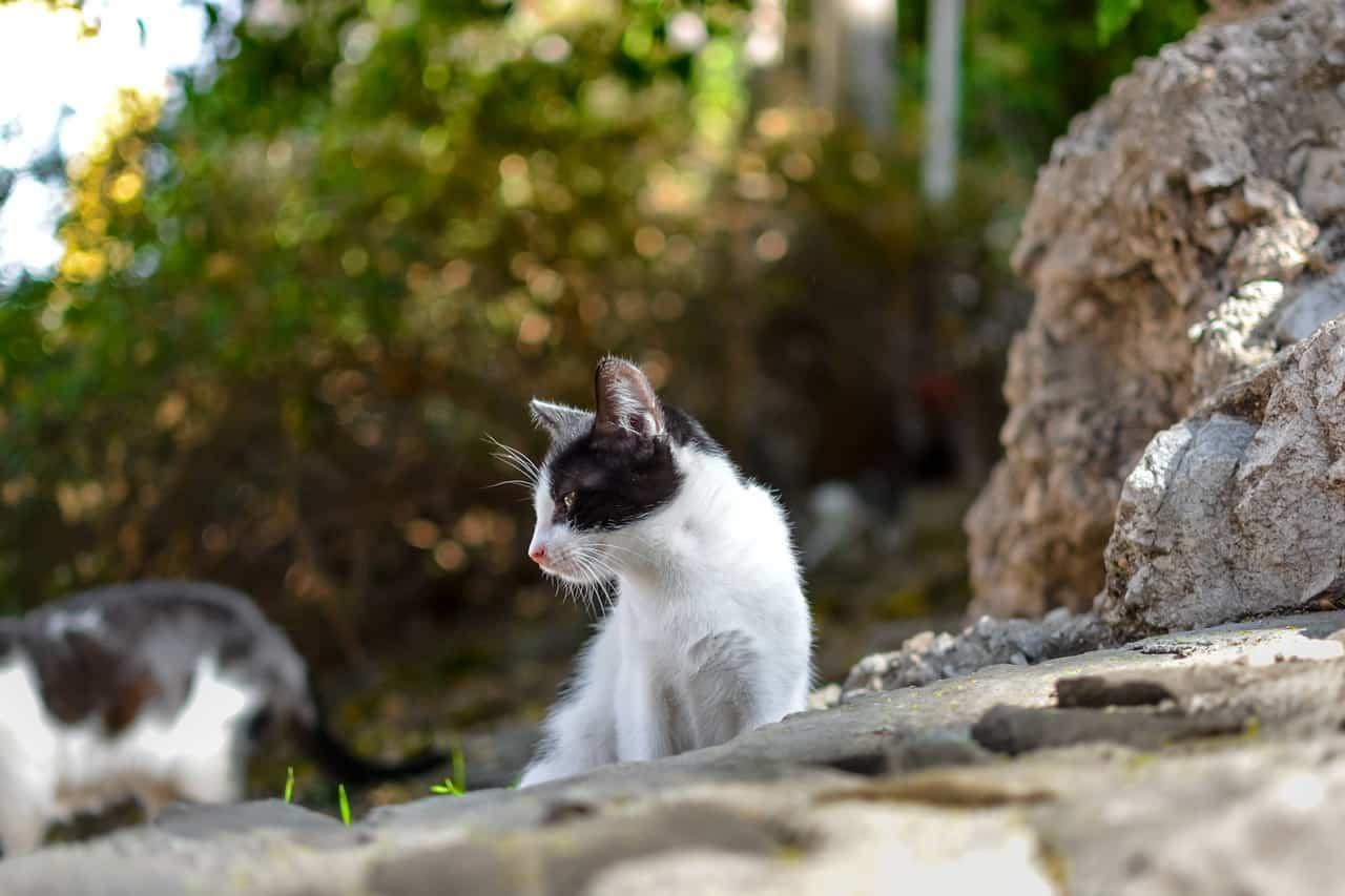 kitten 3194259 1280