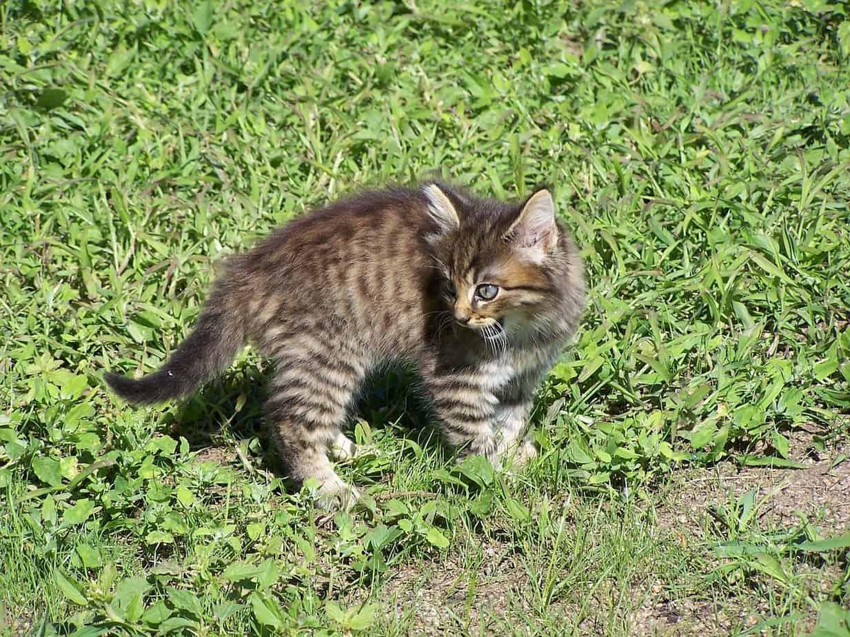 kitty 215030 1280