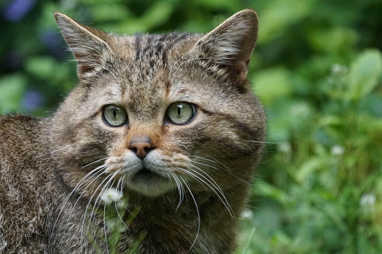 wildcat 1382177 1280