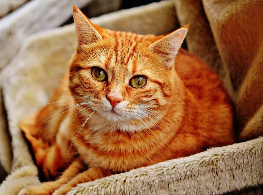 cat 1046544 1280