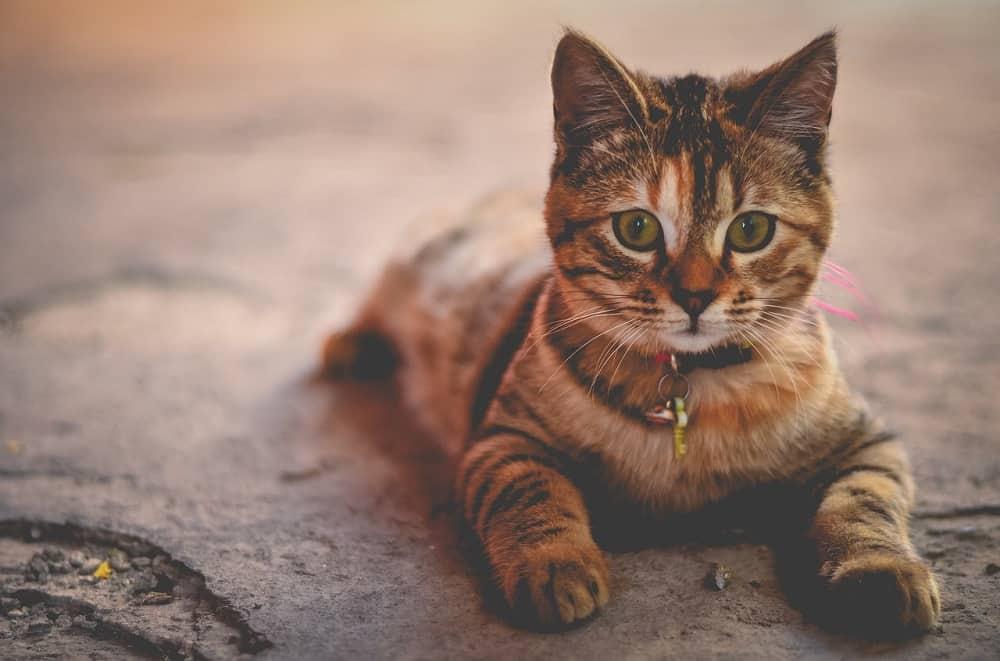 cat 1245673 1280