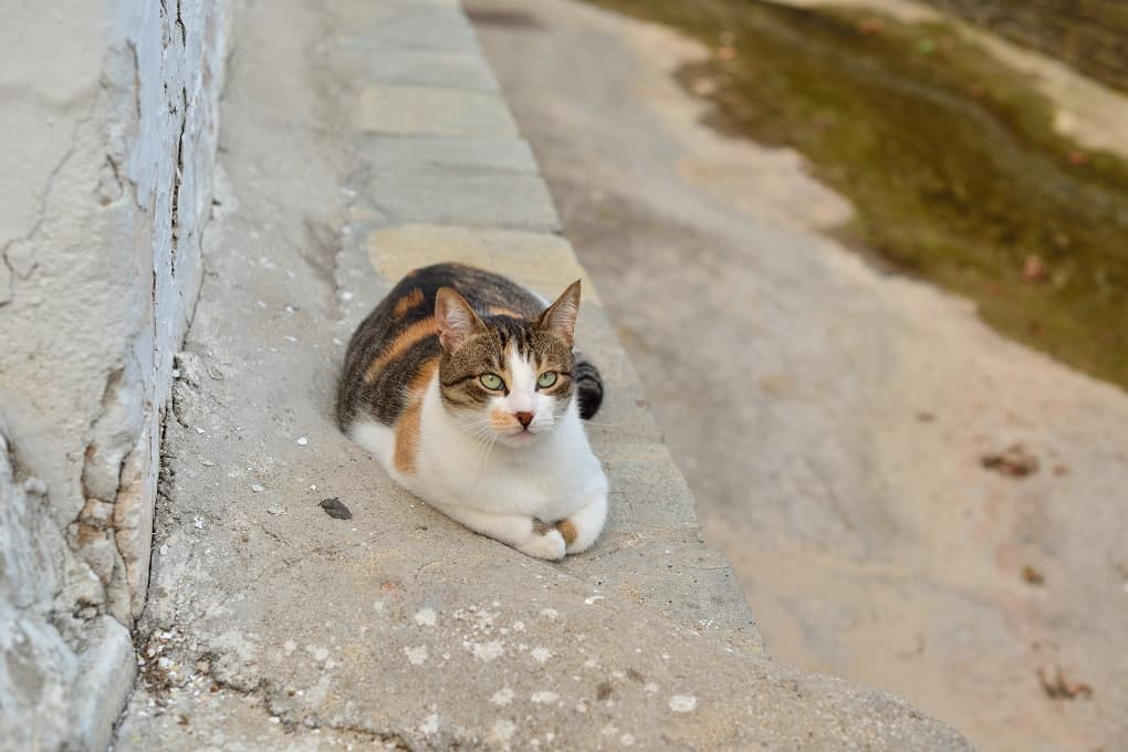 Aegean Cat Sitting