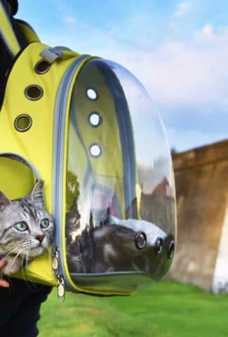 Best cat backpacks for 2021